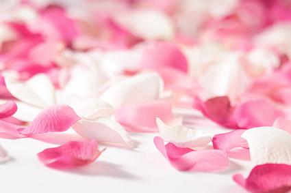 「flower free photo」の画像検索結果